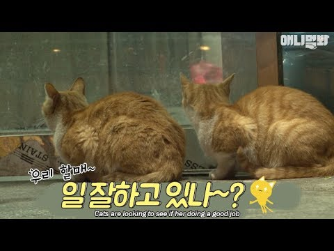 Bodyguard cats protect the restaurant owner all the time
