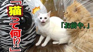 自分は人間だと思ってる子猫が初めて猫を見たときの反応が面白すぎるwww