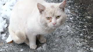 Sad white cat and two cats