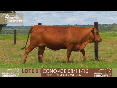 LOTE 01 CONQ 438