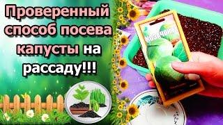 САМЫЙ ПРОВЕРЕННЫЙ СПОСОБ ПОСЕВА КАПУСТЫ НА РАССАДУ!!!