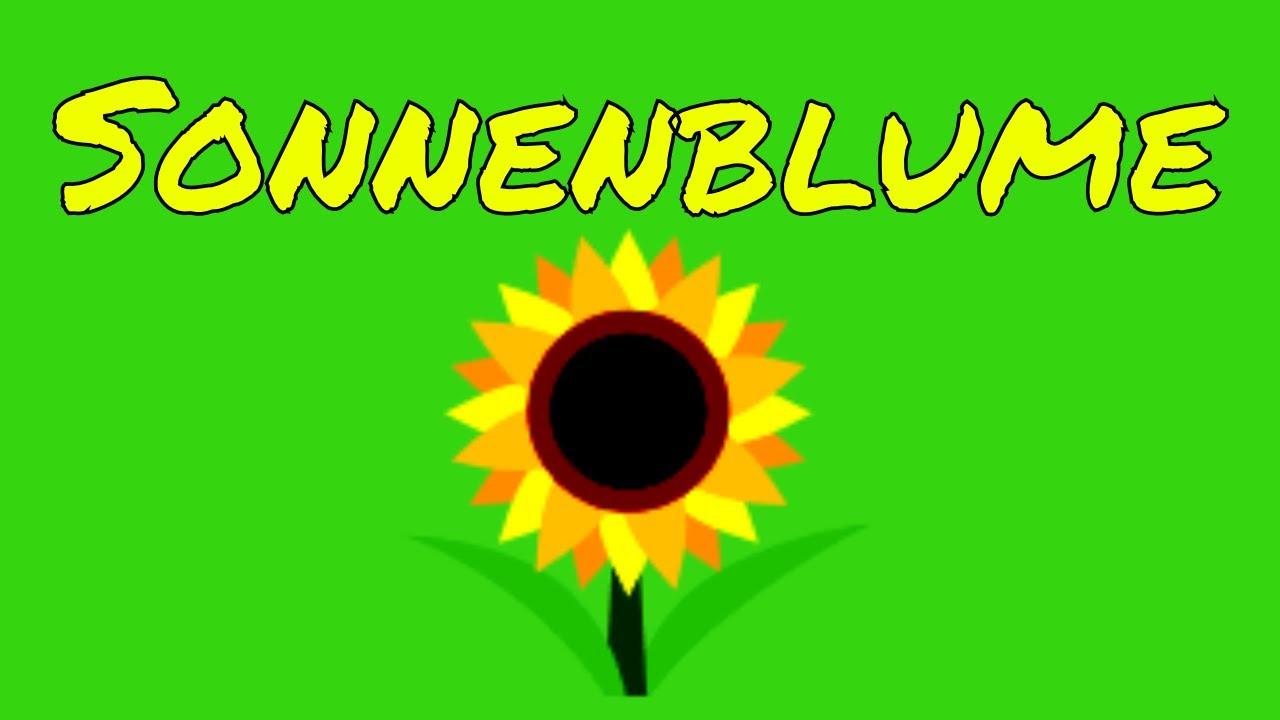 Sonnenblume Gedicht In Leuchtenden Farben Der Sonne Entgegen Nicht Von Goethe
