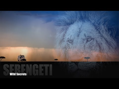 The secrets of the SERENGETI - Wildlife Safari Tanzania - 4K video in Africa