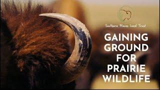Gaining Ground for Prairie Wildlife