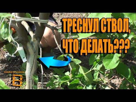 Вопрос: Будет ли урожай на плодовых деревьях, если их не обрезать?