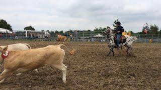 Compétition d'équitation équestre de tri de bétail