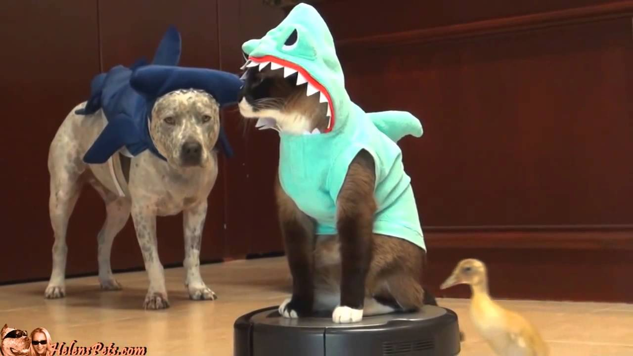 Sep 16, · The shark may be the apex predator at sea but your pal will be the top trick-or-treater on the block with the Frisco Shark Dog & Cat Costume. This plush shark comes complete with embroidered eyes and white felt teeth, three plush-filled fins and even a tailfin!/5(7).