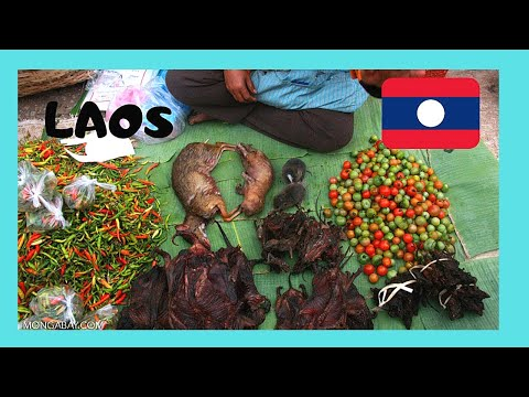 LAOS: Cooked RATS, FROGS, BEETLES and GRASSHOPPERS sold in LUANG PRABANG'S MARKET