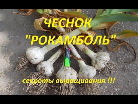 10 правил выращивания чеснока #urozhainye_gryadki