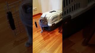 Первые минуты кошки в новом доме из приюта