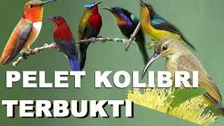 Download Lagu Pikat kolibri depan rumah sultan... hehehehe... mp3