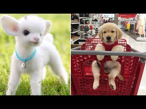 Baby Animals 🔴 Funny Cats and Dogs Videos Compilation (2020) Perros y Gatos Recopilación #14