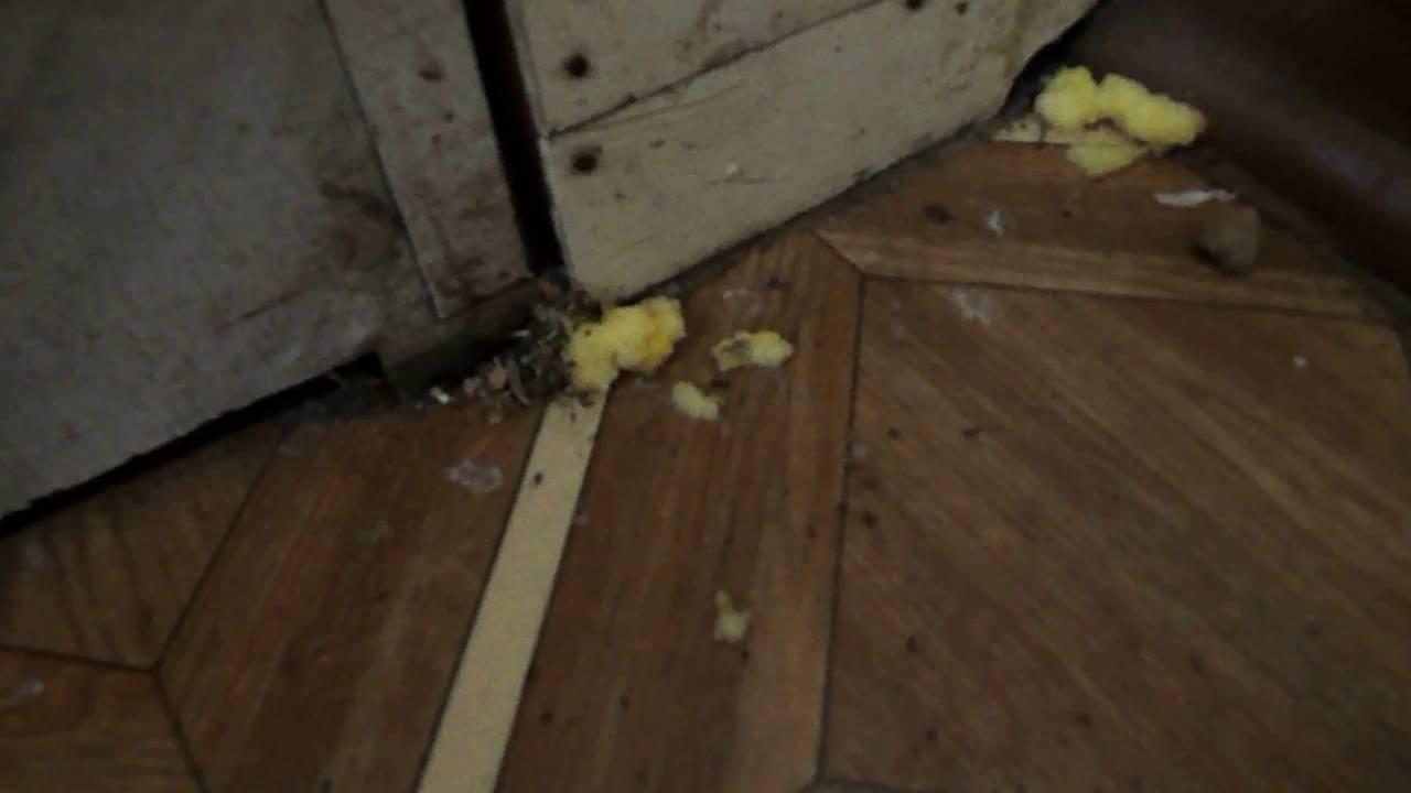Сам Себе Шью. Как избавиться от домашних муравьев. - YouTube