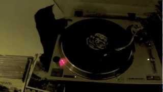 Dj Ringo strikes again - Cat playing vinyls (Gato DJ)
