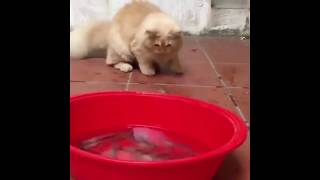 Funny Cats and Dogs 2018