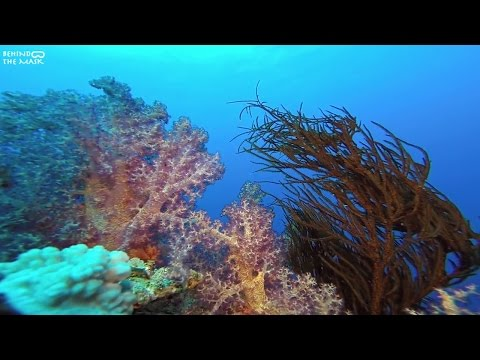 Black corals with Go Pro (Dahab - Ras Mamlah)