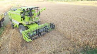 ( jugar ) kale di combine l Kartar Combine l Combine cutting wheat