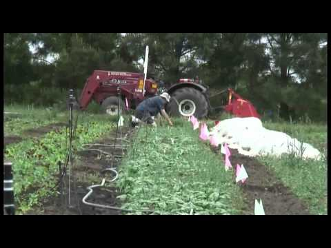 Organic Agriculture at WSU