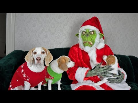 Dogs, Puppy & Grinch Ruin Christmas: Funny Dogs Maymo, Penny, & Potpie