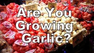 Are you Growing Garlic?