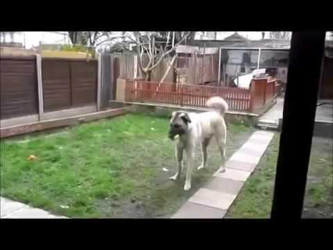 Yıllar sonra sahibini gören hayvanlar