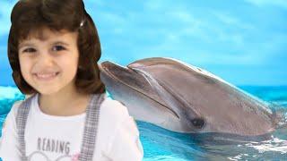 لا تفوتوا عرض الدولفين | سوار وماسة | dolphin shows
