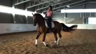 amazing dressage horse