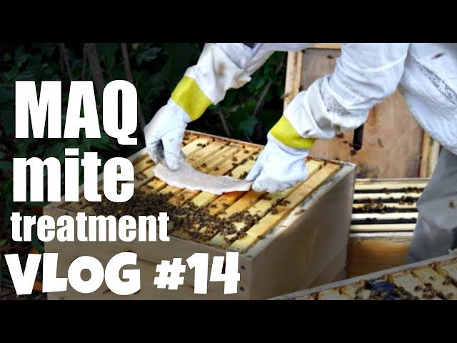 Mite-Away-Quick Strip MAQs Summer Mite Treatment 1st Year Hive   Bee Vlog #14