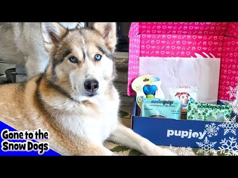Download Youtube: Husky Gets Veggie Treats | Pupjoy Box Unboxing with Dog Commentary