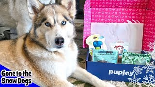 Husky Gets Veggie Treats | Pupjoy Box Unboxing with Dog Commentary