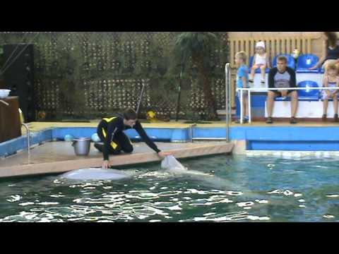 Ярославский дельфинарий.