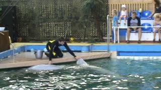 Ярославский дельфинарий.(, 2013-11-25T17:14:10.000Z)