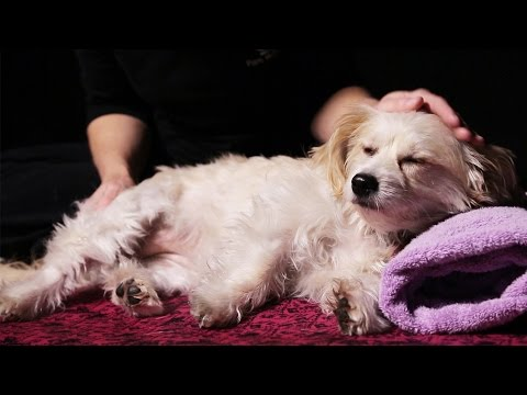 Ticket To Heaven - Dogs Get Massages For The 1st Time