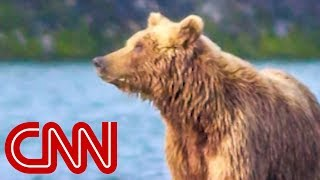 Interior moves to allow bacon, doughnuts to bait bears