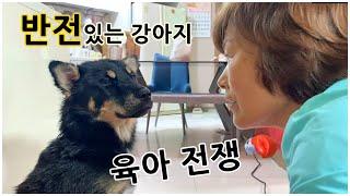 반전있는 강아지 (아기 육아와 강아지육아의 공통점)