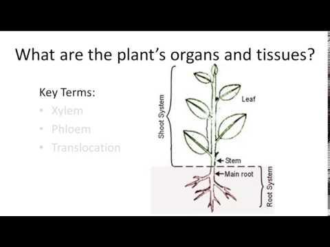 Plant Organ Structure
