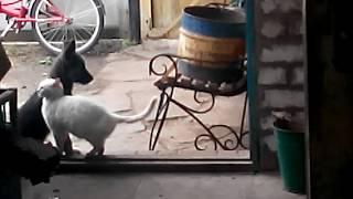 Любовь кошки и собаки
