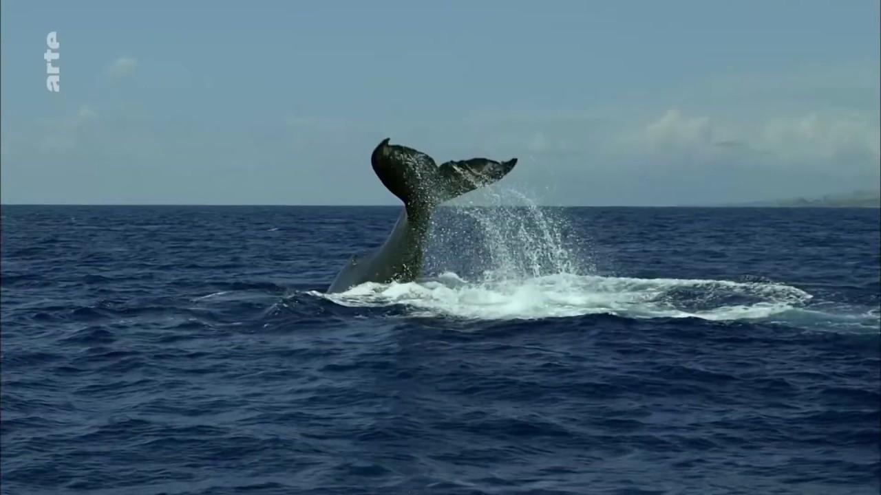 Pacifique : Un océan féroce [Documentaire arte HD]