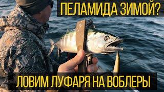 Как ловить луфаря на воблеры зимой Рыбалка на Черном море Поймал пеламиду