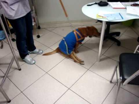 Yako hernia discal for Silla oficina hernia discal
