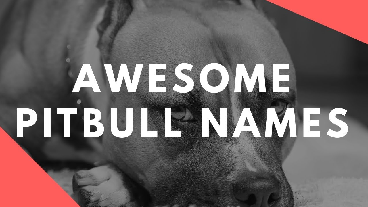 Badass Dog Names for Your Tough Dog | More Than 1000+ to