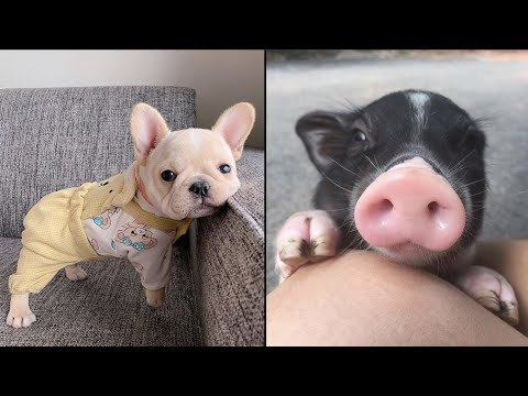 AWW CUTE BABY ANIMALS Videos Compilation cutest moment of the animals – Soo Cute! #41