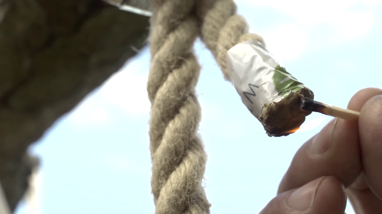 how to stop woodpeckers from damaging trees