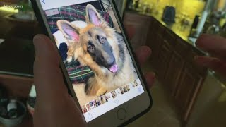 Cypress family believes dogs were poisoned in their backyard