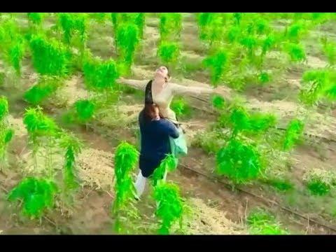Desi Desi Na Bolya Kar | Sorry Sorry Bolu Hath Jodi Ne | Gujrati Remake | Or.Krishna Sound