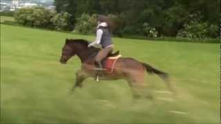 und du sagst, Pferde sind nicht schnell !?