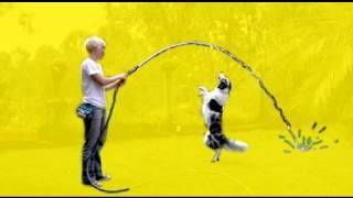 Fooling Around- Clicker Dog Training