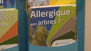 Pas de répit pour les allergies au pollen