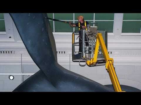 Experience the Museum's 2016 Whale Wash