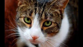 Не топите котят...!